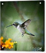 Afternoon Snack - Artist Cris Hayes Acrylic Print