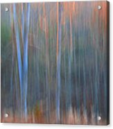 Afternoon Trees Acrylic Print