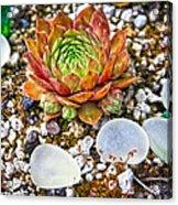 Agates And Cactus Acrylic Print