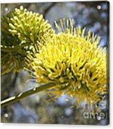 Agave Flowers Acrylic Print