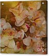 Aged Hydrangeas With Texture Acrylic Print