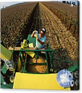 Agricultural Engineer Acrylic Print