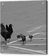 Aint Chicken Acrylic Print by Sean Green