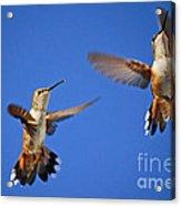 Air Dance Acrylic Print