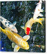 Air Koi 7608 Acrylic Print