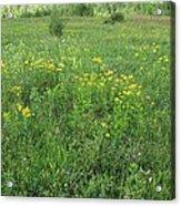 Alberta Summer Meadow Acrylic Print