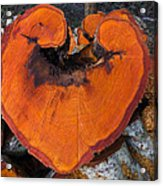 Alder Heart Acrylic Print