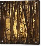 Alder Tree Marshland At Sunrise Acrylic Print