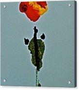 Alein Flower Acrylic Print