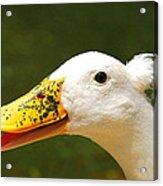 Alfalfa The Duck Acrylic Print