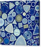 Algae, Fossil Diatoms, Lm Acrylic Print by M. I. Walker