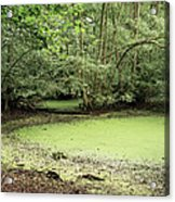 Algal Bloom In Pond Acrylic Print by Michael Marten