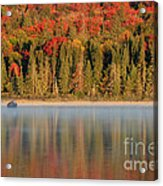 Algonquin Reflections Acrylic Print by Chris Hill