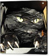 Alice's Cat Acrylic Print by Rebecca Margraf