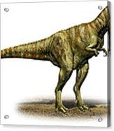 Alioramus Remotus, A Prehistoric Era Acrylic Print