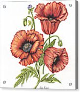 All About Poppies Acrylic Print