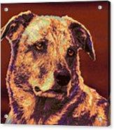 All American Mutt 2 Acrylic Print by Jane Schnetlage