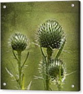 All Prickles And Stings Acrylic Print