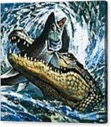 Alligator Eating Fish Acrylic Print