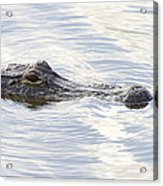 Alligator With Sky Reflections - A Closer View Acrylic Print