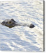 Alligator With Sky Reflections Acrylic Print