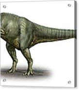 Allosaurus Fragilis, A Prehistoric Era Acrylic Print