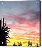 Aloe Ferox  South Africa Acrylic Print