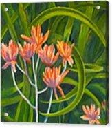 Aloe Swirl Acrylic Print