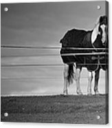 Alone On The Hill Acrylic Print