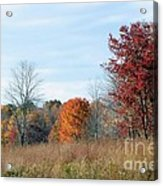 Alone With Autumn Acrylic Print