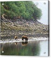 Along Geographic Bay Acrylic Print