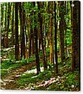 Along The Hiking Trail Acrylic Print
