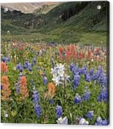 Alpine Flowers In Rustler's Gulch, Usa Acrylic Print