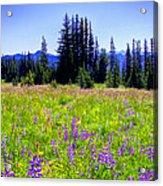 Alpine Meadow V At Mount Rainier Acrylic Print