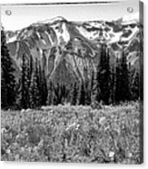 Alpine Meadow Viii At Mount Rainier Acrylic Print