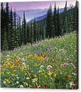 Alpine Wildflower Meadow, Mount Acrylic Print
