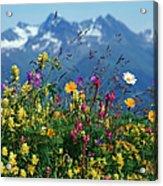 Alpine Wildflowers Acrylic Print
