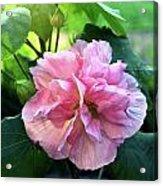 Althea Rose Of Sharon Acrylic Print