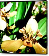 Always Orchids Acrylic Print