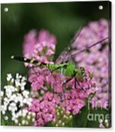 Always Stop To Smell The Flowers Acrylic Print