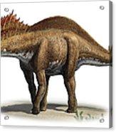 Amargasaurus Cazaui, A Prehistoric Era Acrylic Print