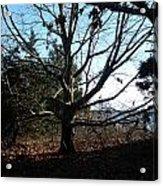 Amazing Tree Acrylic Print