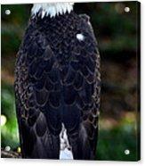 America Bird Acrylic Print