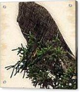 American Bald Eagle In Tree Acrylic Print