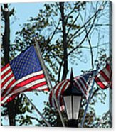 American Beauty Acrylic Print by James Hammen