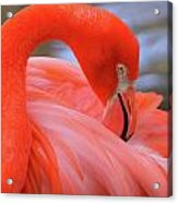 American Flamingo Acrylic Print