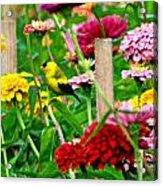 American Goldfinch In The Garden Acrylic Print