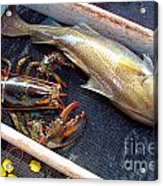 American Lobster And Cod Caught Off Chatham On Cape Cod Acrylic Print