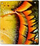 American Lobster Closeup In Chatham On Cape Cod Acrylic Print