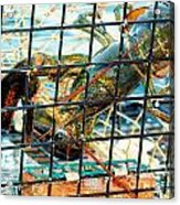 American Lobster In Trap In Chatham On Cape Cod Acrylic Print